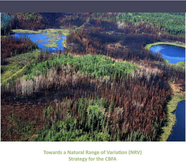 Provided Project Management for the development of the Natural Range of Variation Strategy for the Canadian Boreal Forest Agreement (CBFA)