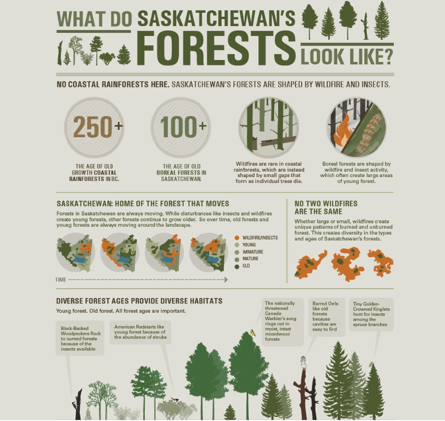 This Infographic was developed for the Government of Saskatchewan and describes the forest in that province.   Click the image to download the full graphic.