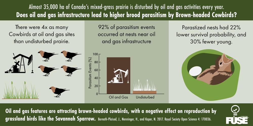 Cowbird Infographic