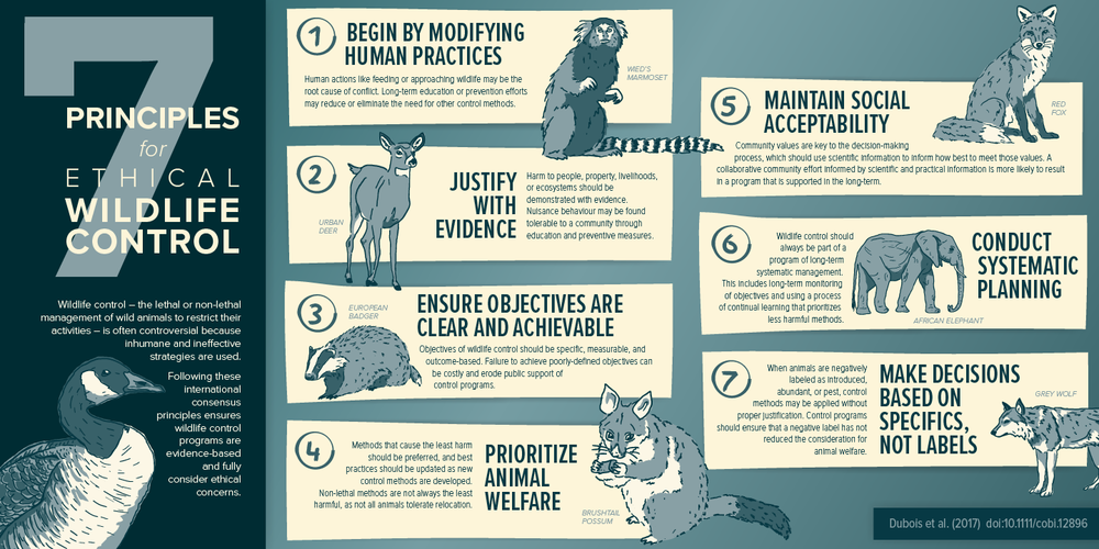 BCSPCA_WildlifeControl_Infographic_V11_01_ForWeb.png