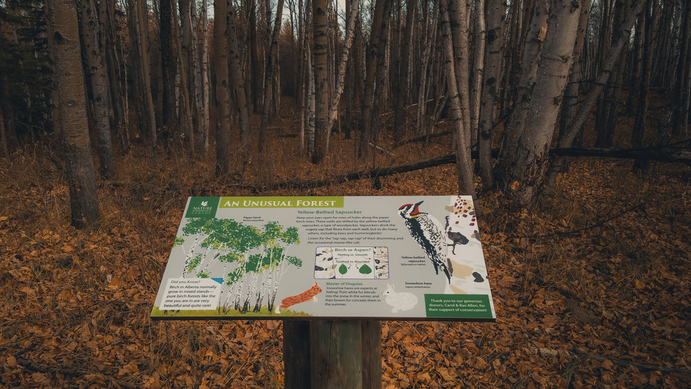 Interpretive Signage - When the Nature Conservancy of Canada asked for help with Interpretive Signage for their new Bunchberry Meadows property, we knew it was a match made in heaven. Our work helped showcase the natural wonders of this incredible property.