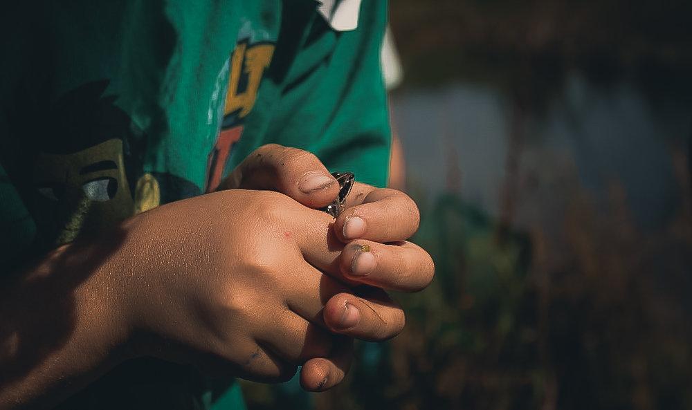 frog-2.jpg