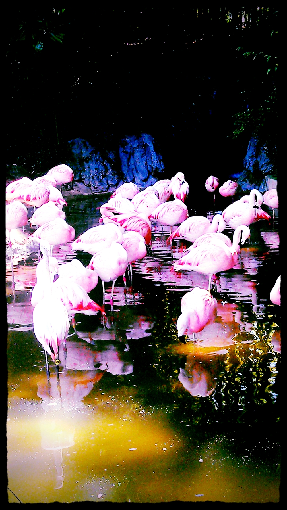 flamingos nap