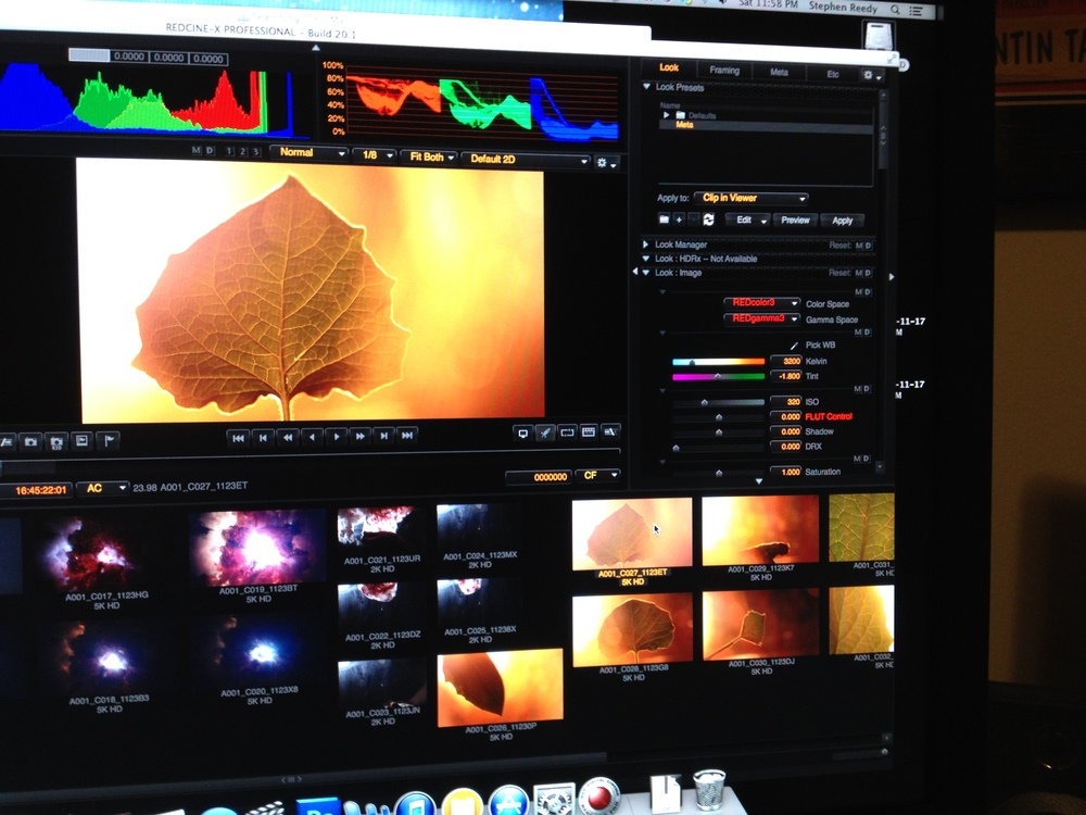 I'll have to write about how we literally trained a living leaf to act on command (P.S. the shot is in my demo reel). Also notice the PRACTICAL BIG BANG action!