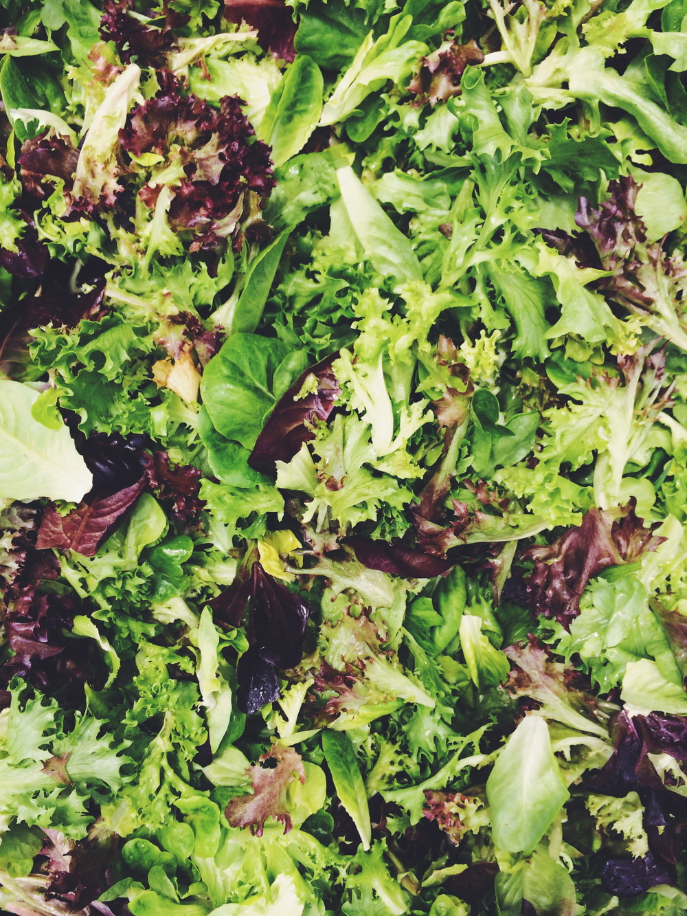 Colorful and tender baby lettuces make the most delicious salads, especially when mixed with our custom spicy mix.