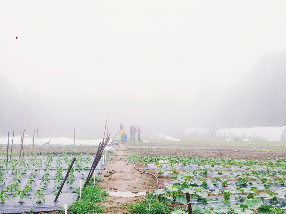 Last Sunday In August Felt More Like >> A Fruitful June Four Root Farm