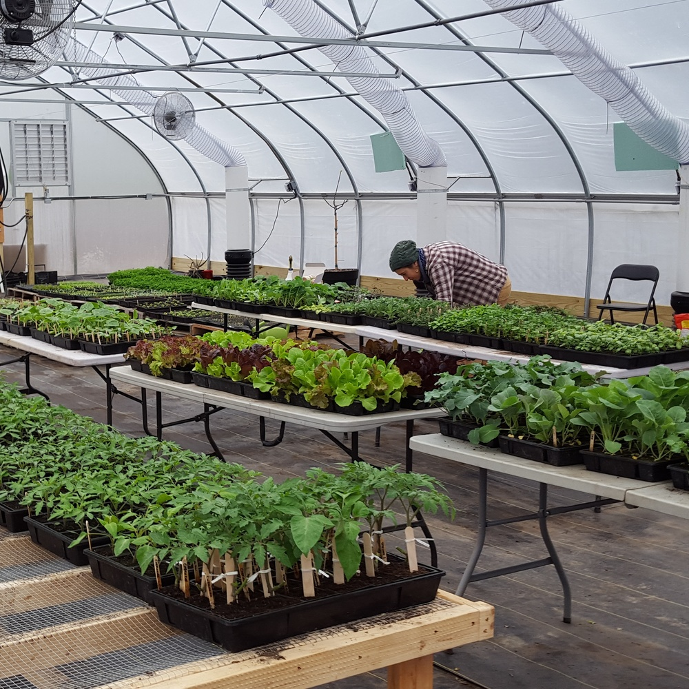 The greenhouse, filling up and very organized.