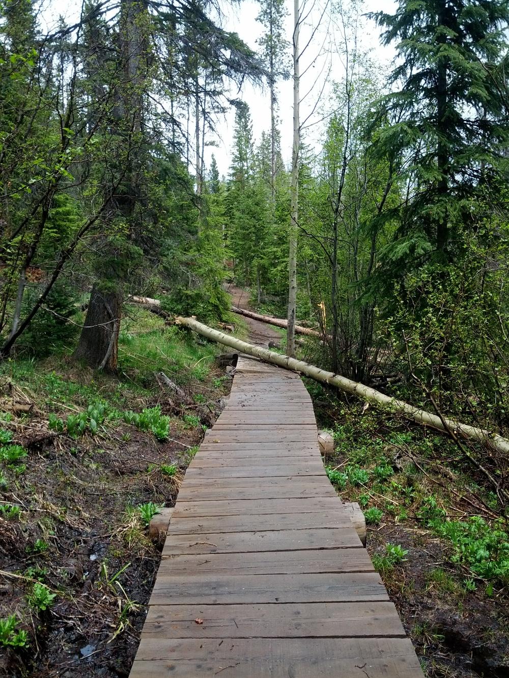 Mother Nature vs the bridge
