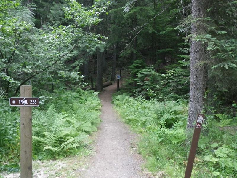 Giant White Pines trail head.jpg