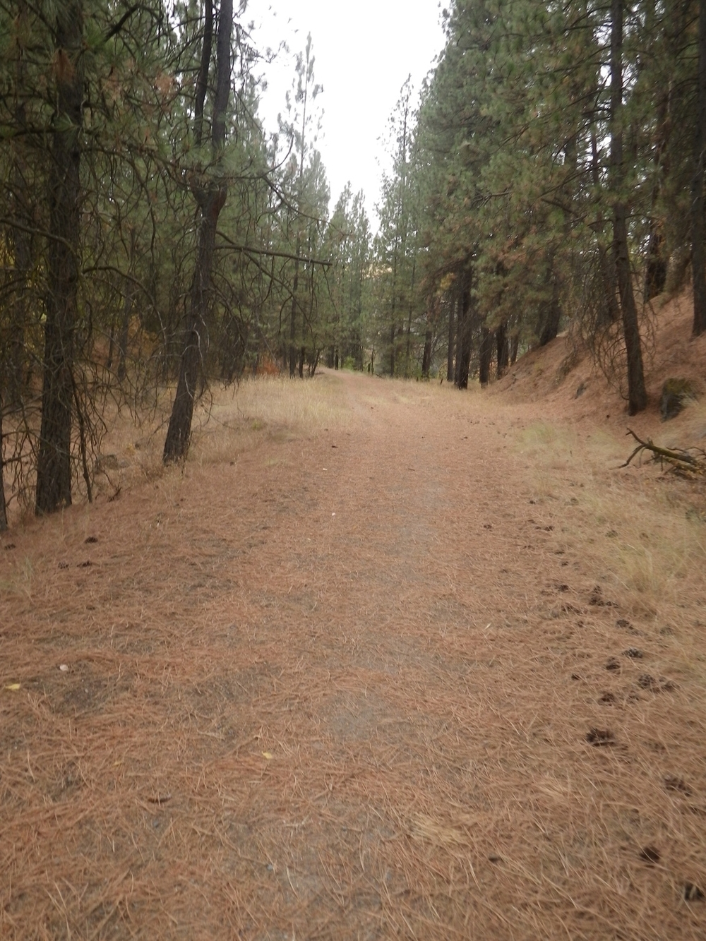 The footing is varied but mostly good. Watch for the occasional rock. Also, bear, deer, elk, and cow poop. The Colfax Rail Trail just after the abandoned trestle.