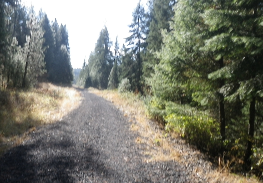 Early part of the trail, just past the gate at the trailhead.