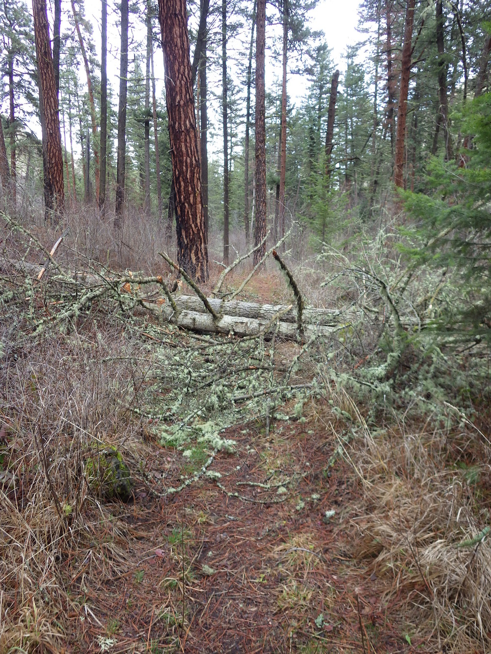 Trail hurdle. Lots of deadfall up-trail