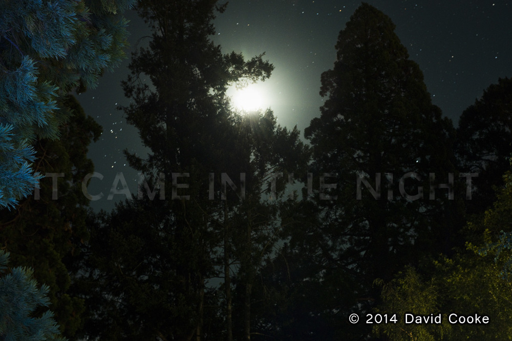 DCooke - Came in the Night - 2014.jpg
