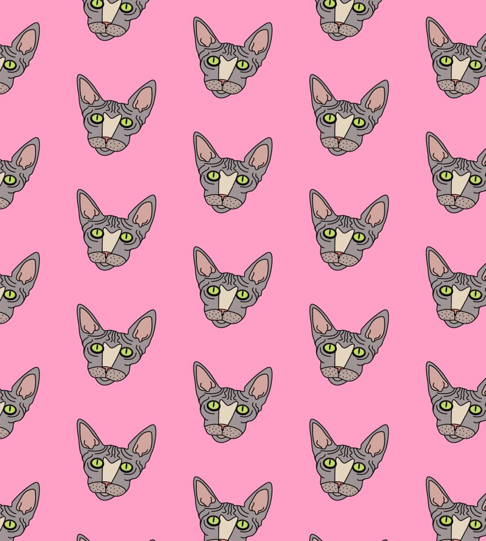 JOJO THE SPHYNX CAT