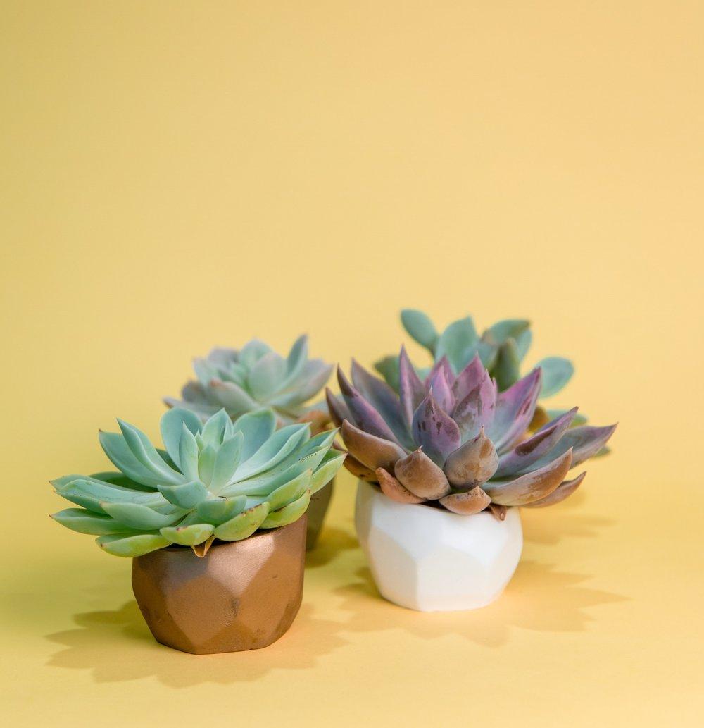 succulent-24.jpg