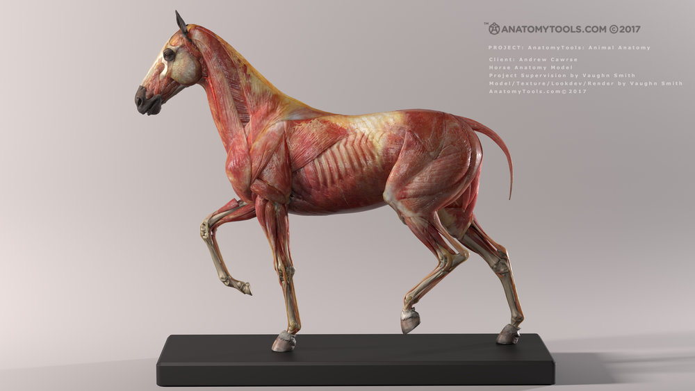 horse_v3_render_lvw_v08_withText_2K_WEBSITE.jpg