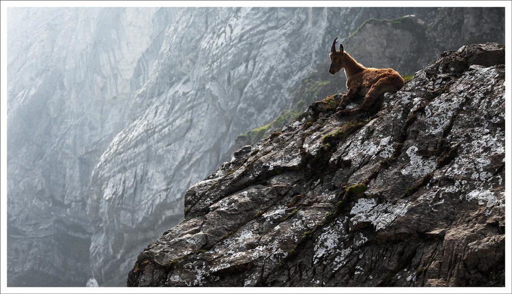 goat2_WEB.jpg