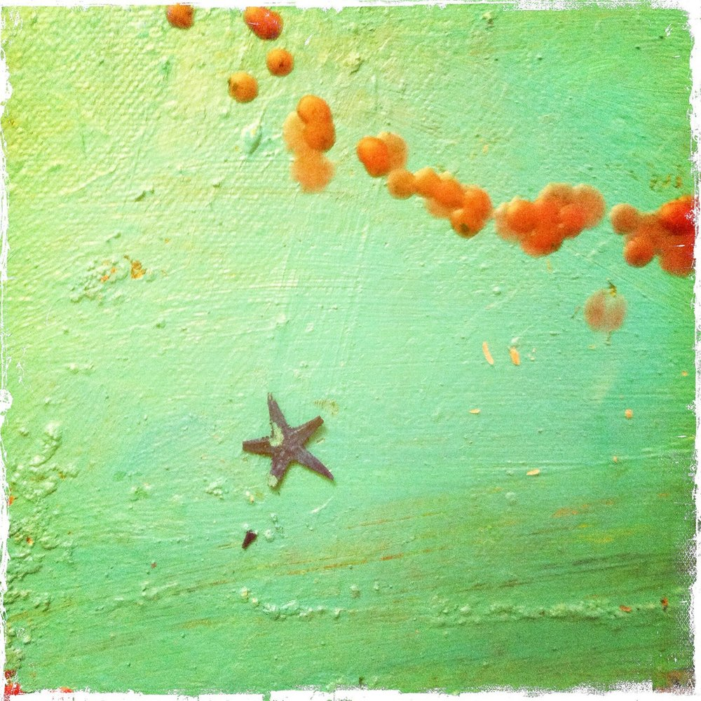 Starfish Print. Acrylic with Candle Wax. 2012.