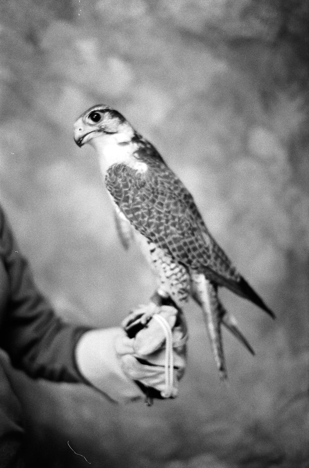 Wildlife-.jpg
