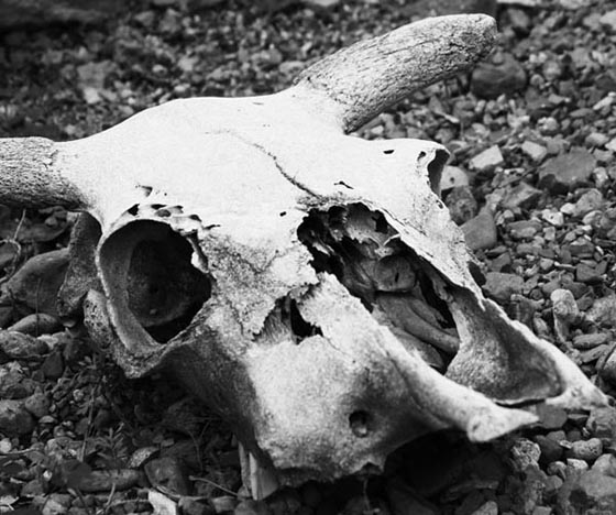Skulls4.jpg