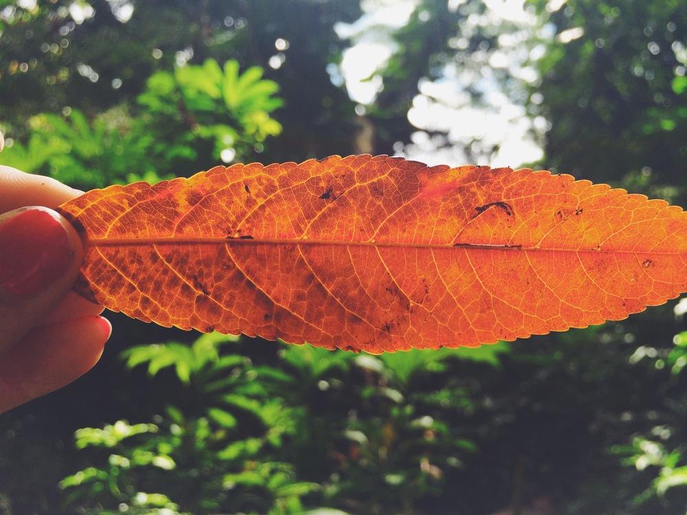 Orange6.JPG