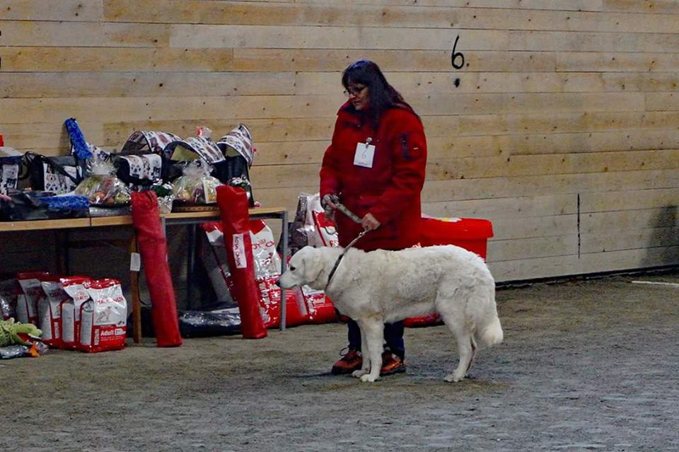 Docka's sister Bejke with her handler. Photo: Solveig Bergman.