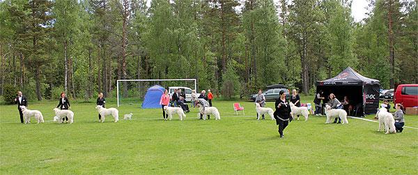 Bedömning. Foto: SvKK.