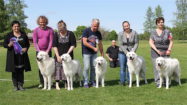 Best breeding group 2 after Sorschies Szép Gulyás. Photo: SvKK.
