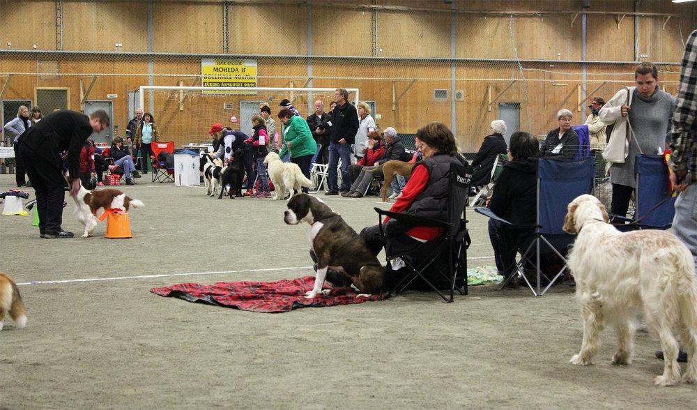 SvKKs hundutställning i Moheda. Foto: Kicki Svalin.
