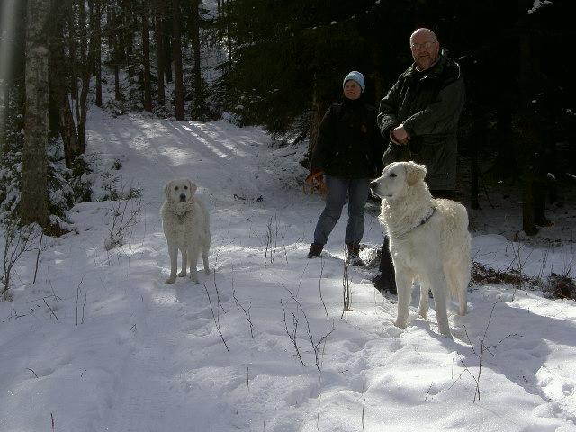 Anya & Länsman på skogspromenad.