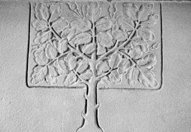 Tree (of life?)