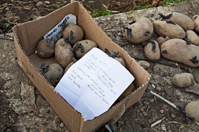 Another first - fingers crossed for homegrown spuds this year
