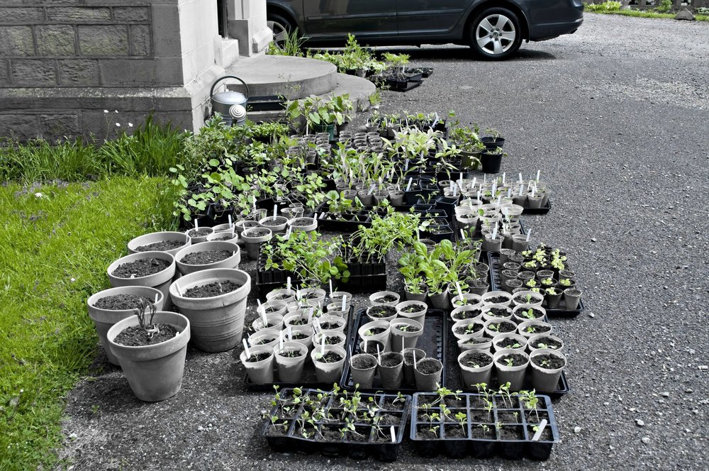 Spring plants raised from seeds