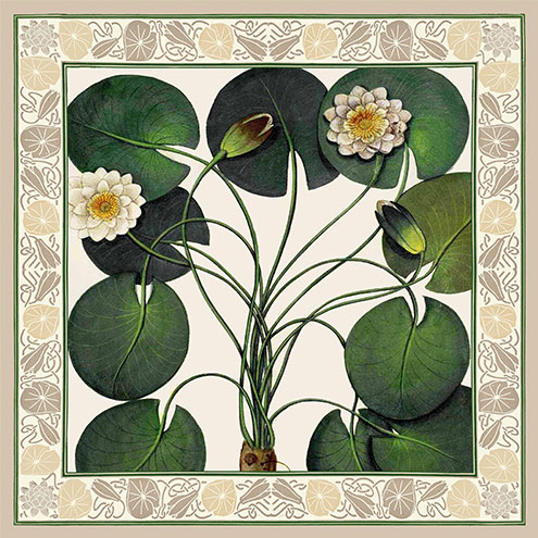 PARISIAN WATERLILY COLLECTION