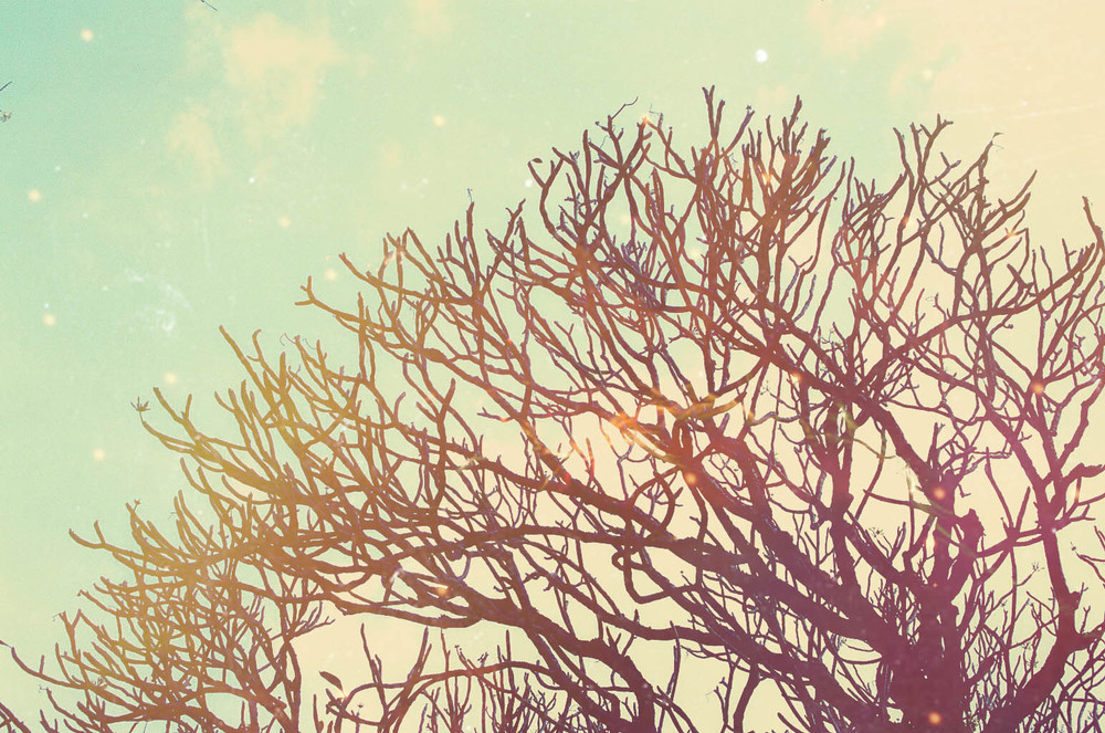 Dreamy_1.jpg
