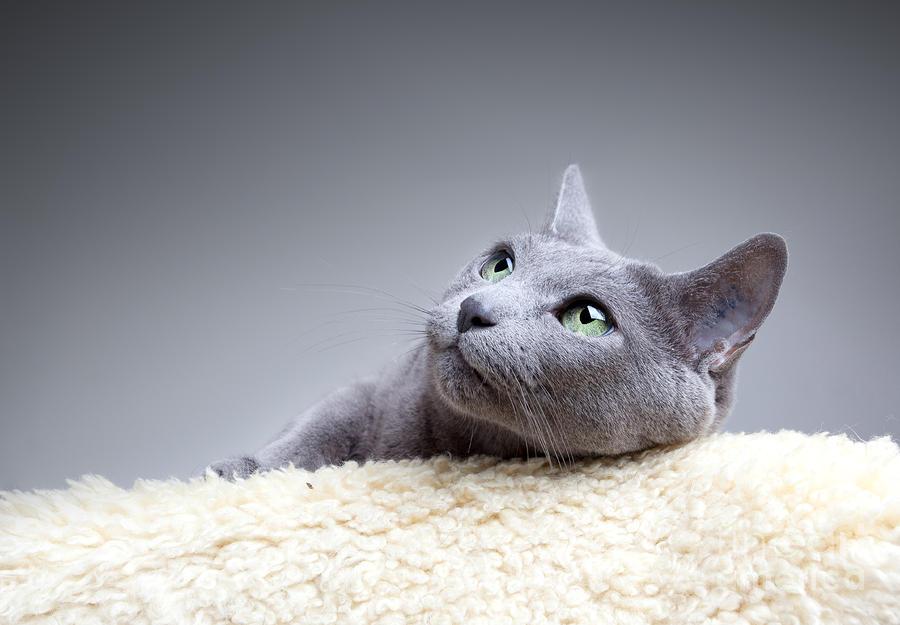 Show cat.jpg
