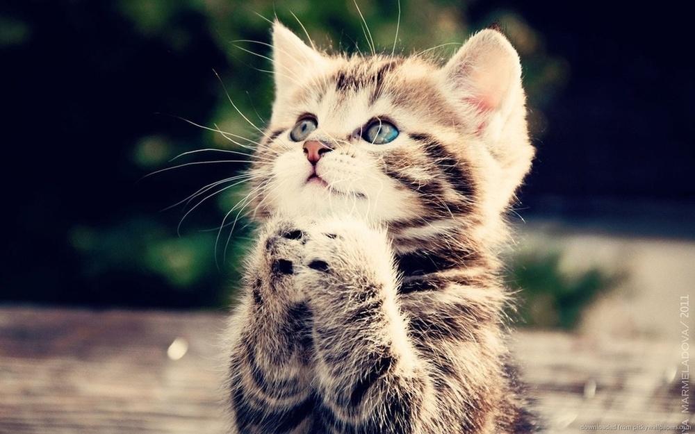 Sweet Kitten.jpg