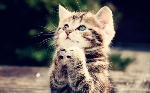 The kitten chronicles