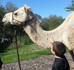 Kiddo and camel.JPG