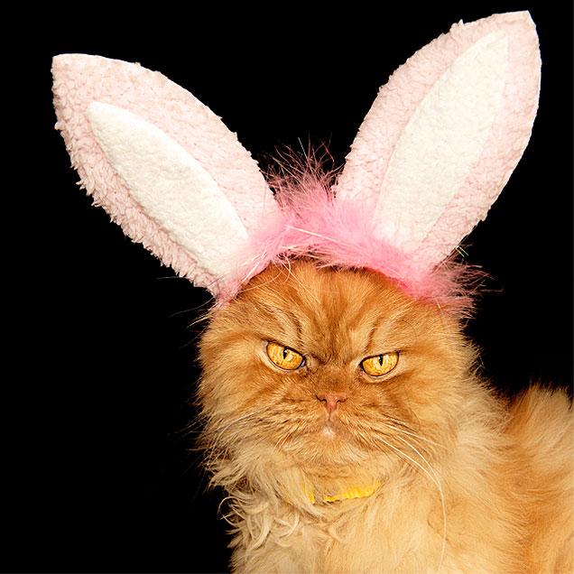 angry bunny kitty