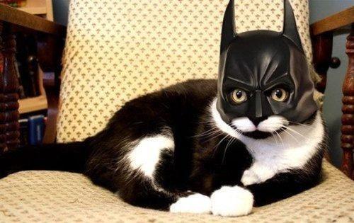 batman kitty