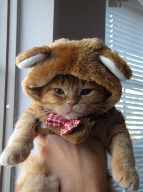 bear kitty