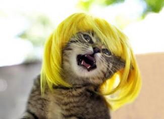 blonde kitty