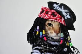 bob marley kitty