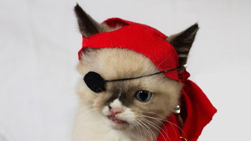 eye patch kitty