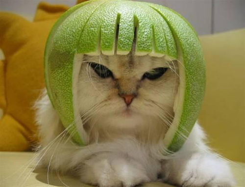 lime head kitty