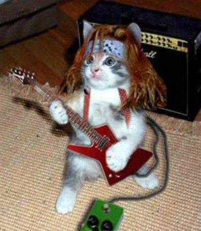 rocker kitty