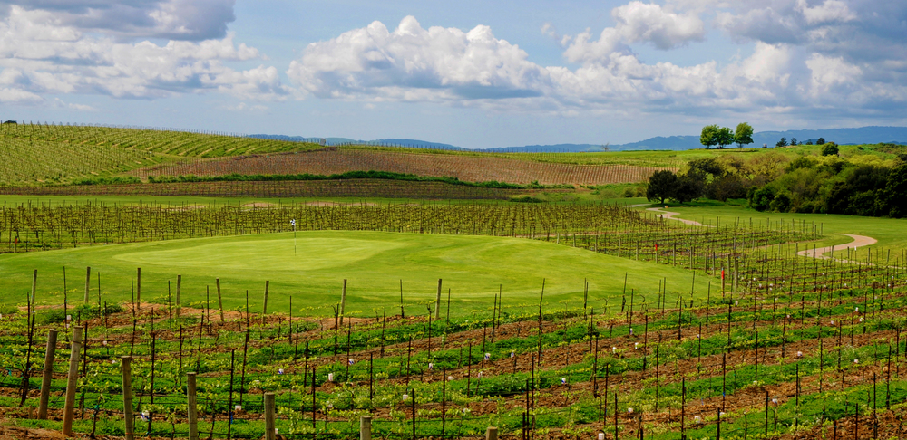 One of the many greens surrounded by vineyards © Robert Kaufman