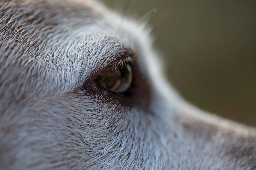 """""""Beast""""  My dog, aka The Beast - Asheville, NC"""