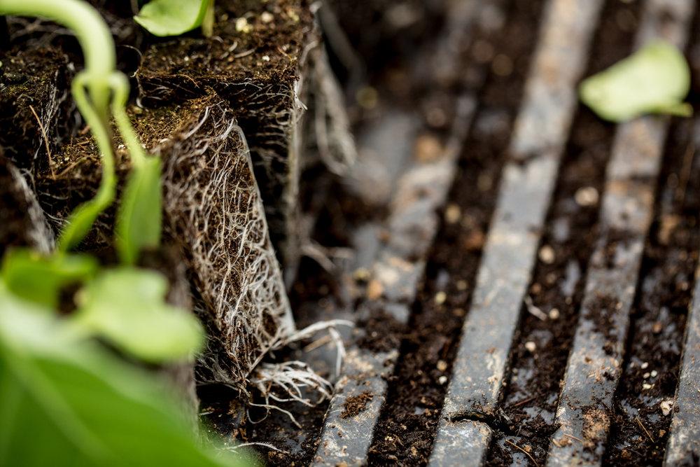 West Ashe - Paper Crane Farm - Roots